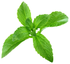 Leaves from a Stevia plant